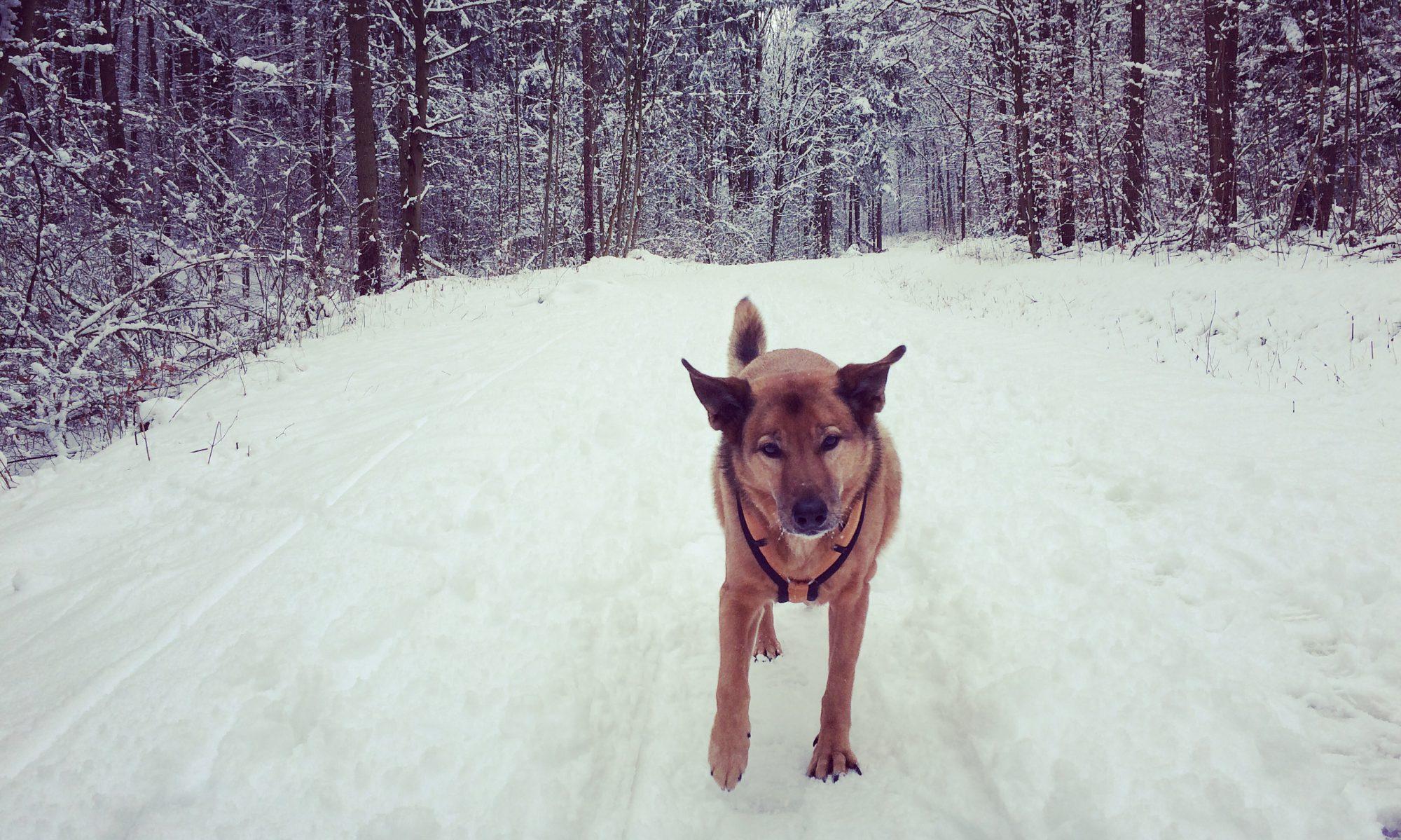 CaniFood - Übersicht Für Hundefutter